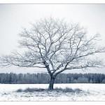 Kış-4
